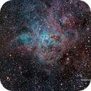 Tarantula Nebula,                                Jorge Herreros