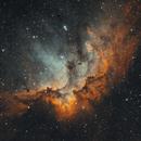 Wizard Nebula (bicolor),                                John Renaud