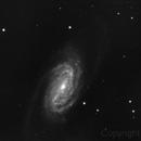 NGC 2903,                                Edoardo Perenich