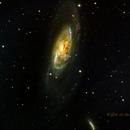 M 106 Spiral Galaxy in Canes Venatici,                                Dale A Chamberlain