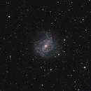 M83 Galaxy,                                Tim Lewis