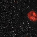 Cocoon Nebula,                                Steve Lenti