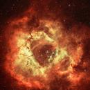 NGC 2237 Rosette Nebula,                                John Burns