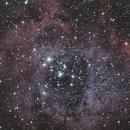 Rosette Nebula,                                Astroflo