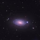 Sunflower Galaxy,                                Dan Crosse