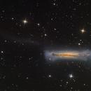 NGC 3628 - Hamburger Galaxy,                                Paul Schuberth