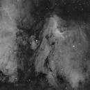 Pelican Nebula,                                S. DAVID