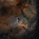 IC 1396,                                Adrian Criss