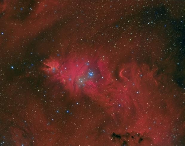 Cone, Fox Fur  & Christmas Tree Nebula NGC2264,                                Carastro