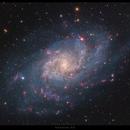 M33 in Triangulum,                                Dan Goelling