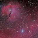 Seagull Nebula,                                Zhuoqun Wu