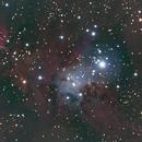 NGC 2264: Christmas Tree Cluster (2012),                                Kurt Johnston