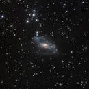NGC 2146,                                Tom Harrison