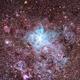 NGC 2070 - Tarantula nebulae,                                Coenie