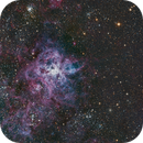 Tarantula Nebula, NGC2070 (and nearby clusters),                                Scott M. Stirling