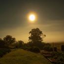 Foggy Moon,                                Rodney Watters