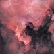 NGC7000,                                Laurent Despontin