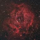 Rosette Nebula (NGC 2244),                                Dom Schepis