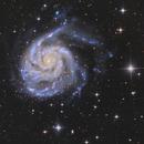 M101 and companions,                                Tudor Chibacu