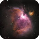 M42 - a bit different in color,                                Georg N. Nyman