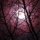 Waning Urban Moon May 2, 2018,                                Sandra Repash