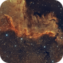 NGC 7000 The Great  Wall in Cygnus,                                Dennis Kaiser
