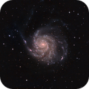 M101 HaLRGB,                                Rob Johnson