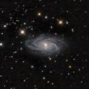 NGC 2336,                                Ron Stanley