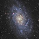 Triangulum Galaxy M33,                                Masahiro Takahashi