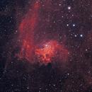 Flaming Star Nebula,                                Scott Homstead