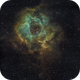 The Rosette Nebula in Hubble Palette,                                Wayne H