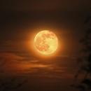 Moonrise on 29th March 2021,                                Henning Schmidt