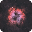 IC 1396 (Radian Raptor 61),                                Trevor Jones