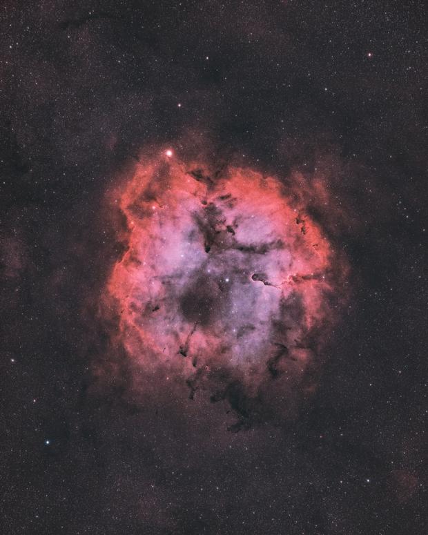 IC 1396 (Radian Raptor 61),                                Trevor Jones
