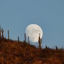 Moonrise in Pima Canyon,                                James Muehlner