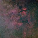 Cygnus,                                Stephen Brown