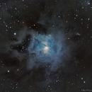 NGC 7023 - Iris Nebula,                                Taman