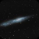 NGC 55 constellation du Sculpteur,                                Roger Bertuli