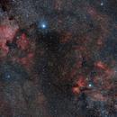 Cygnus,                                BergAstro