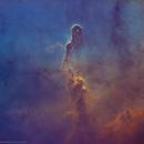 IC 1396 •Elephant Trunk Nebula in SHO (Starless),                                Douglas J Struble