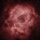 Rosette Nebula,                                Greg Derksen