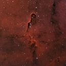 IC 1396A, Elephant's Trunk nebula, bicolor,                                Alexander Sorokin