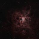 Tarantula in Ha/HB bicolor with EdgeHD11, CGE-Pro, MetaGuide, OAG,                                Freestar8n