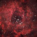 NGC 2244 Rosette Nebula,                                Perry Muir