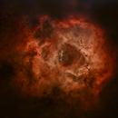 Rosettennebel NGC 2237-39,44,46,                                Gabriele Gegenbauer