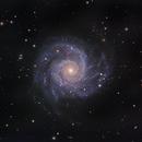 M74 the Phantom Galaxy in Pisces,                                Mark Wetzel