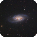 NGC 2903 Galaxy,                                Shannon Calvert