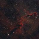 IC 1396A - Elephant's Trunk Nebula,                                Frank Rogin