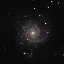 M74 Phantom Galaxy,                                BorygoDriver