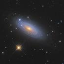 NGC 2841,                                Mathieu Guinot